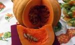 PUMPKIN Muscade de Provence RE4109