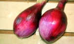ONION Red of Florence RE1631